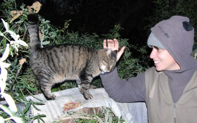 Cleaning a shelter for abandoned cats
