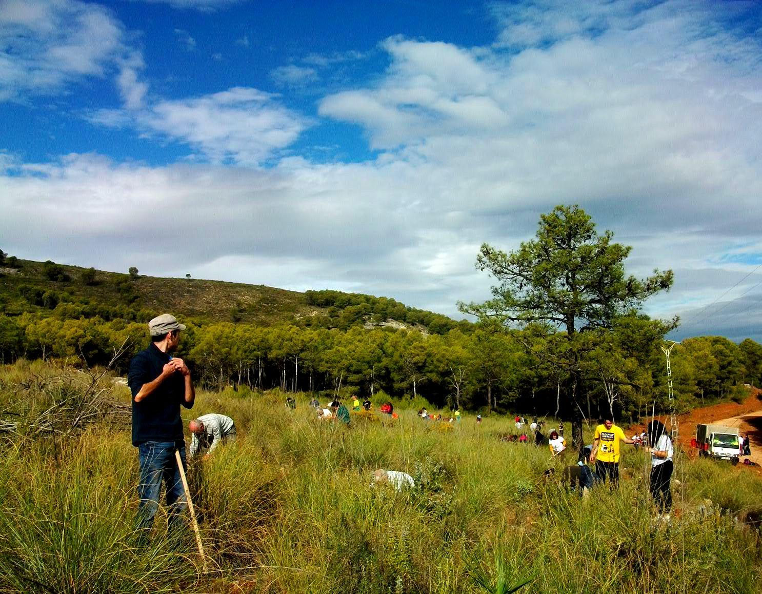 Planting Landscape View