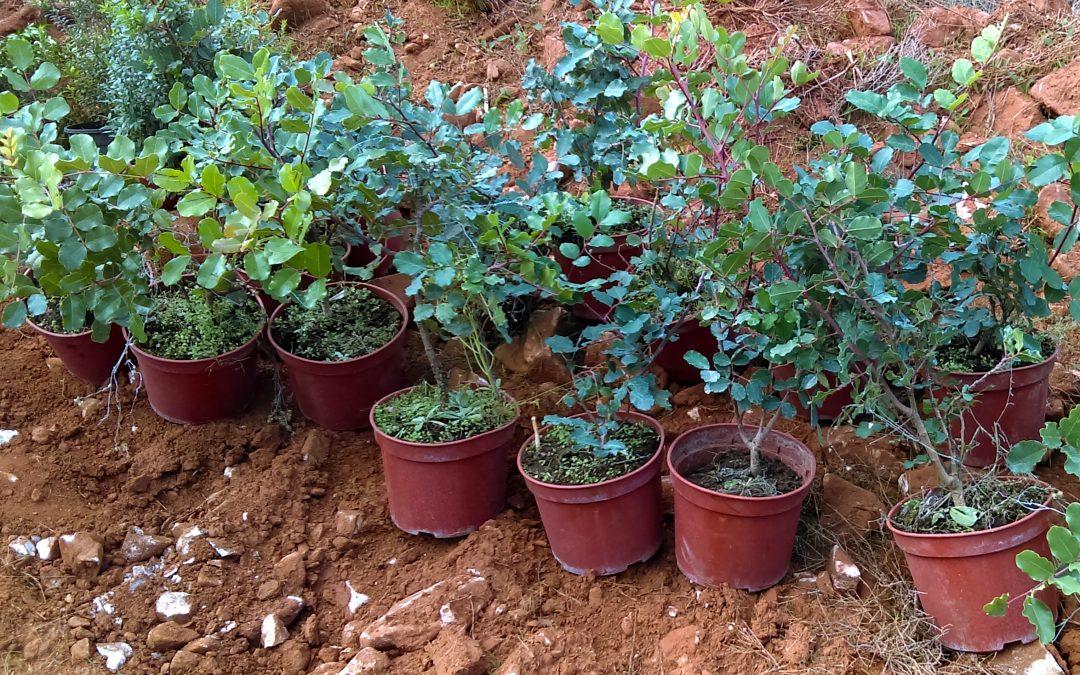 AHE Volunteers Replanting Trees in Malaga (Spain)